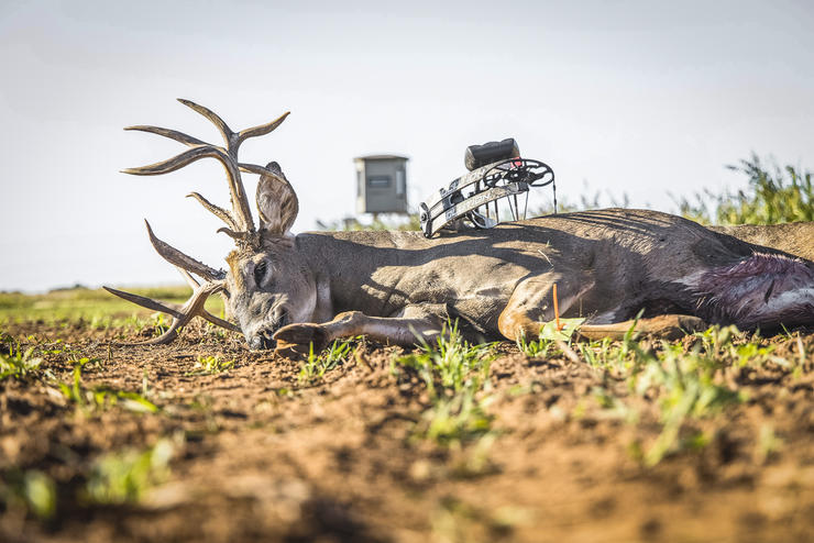 Frontward, backward, and sideways, this deer looks like a giant, and is one. Image by Buckventures