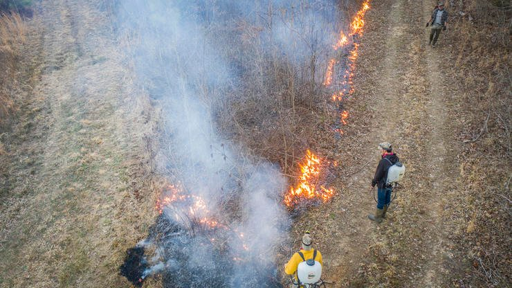 Prescribed fires in sections of your property can have major benefits for turkeys. Image by Realtree