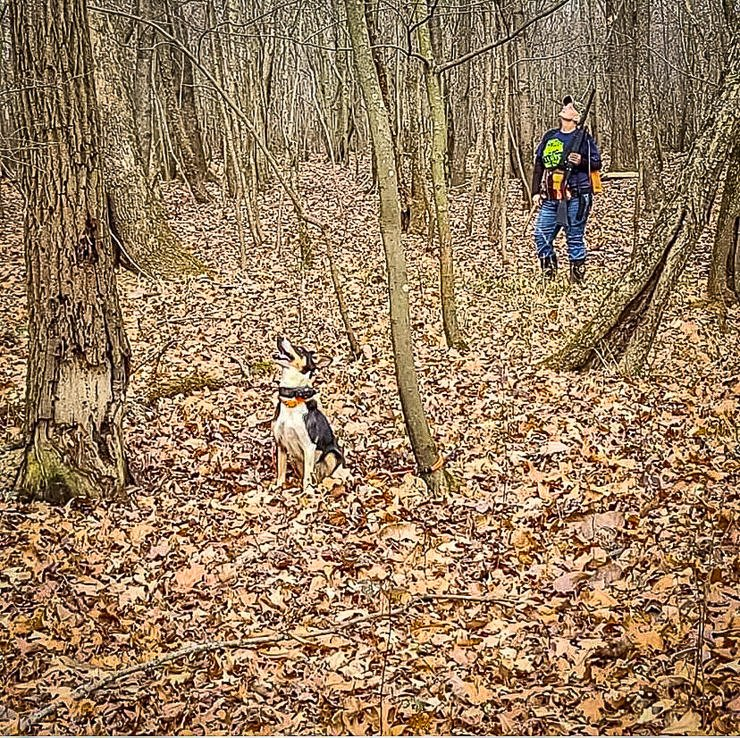 Brandy Oaks scans the timber for the squirrel that Kaos tells her is up there somewhere. Image by Tobby Oaks