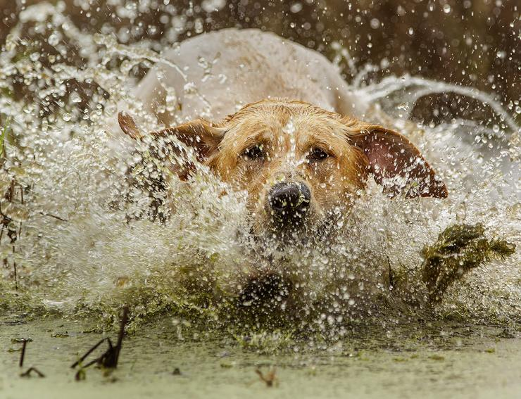 Any solid retrieve is great. Still, some stand out from others. Photo © Bill Konway