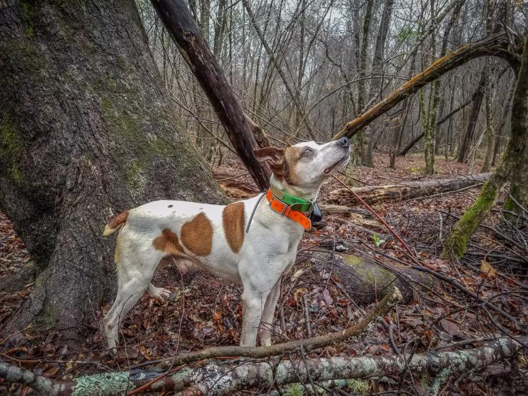 How To Hunt Squirrels In Your Backyard how to hunt squirrels with a dog | small game hunting | realtree camo