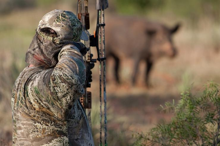 How To Spot And Stalk A Hog Bowhunting Realtree Camo