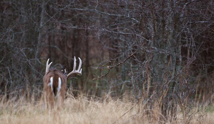 What state would you choose to hunt for a Booner buck? (Russell Graves photo)