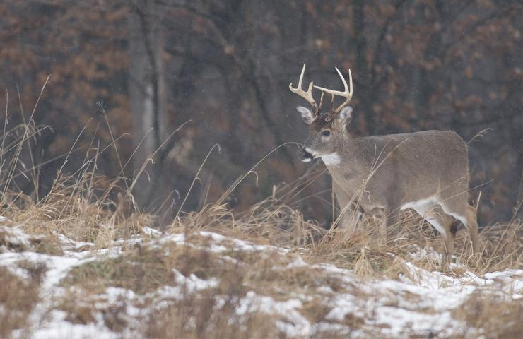 Has the Earn-a-Buck system ever cost you an antlered whitetail? (John Hafner photo)