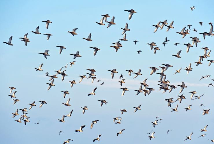 Do weather fronts move birds, or is it photoperiodism? Or both? Photo © J. Marijs/Shutterstock