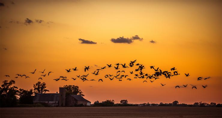 Early goose seasons are right around the corner. Will you be ready? Photo © Bill Konway