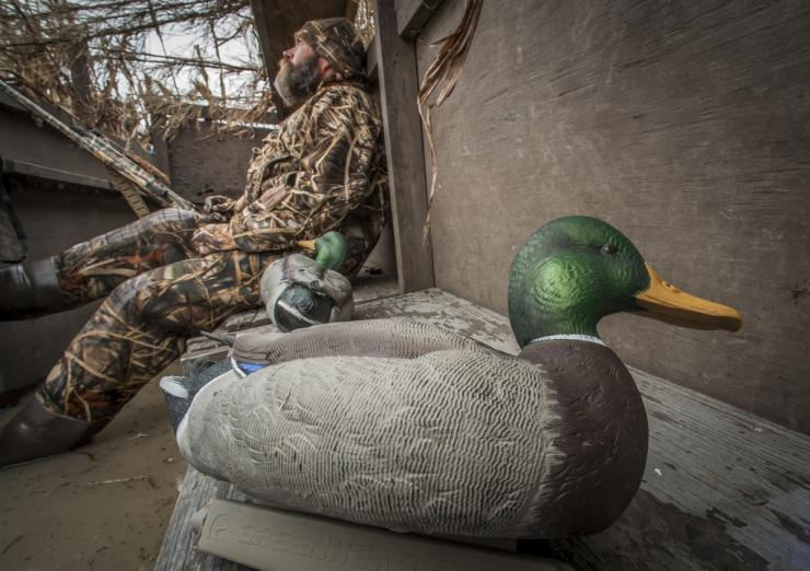 The first rule in the ABCs of decoys is to always have a backup plan in case your surefire spread fails. Photo © Bill Konway