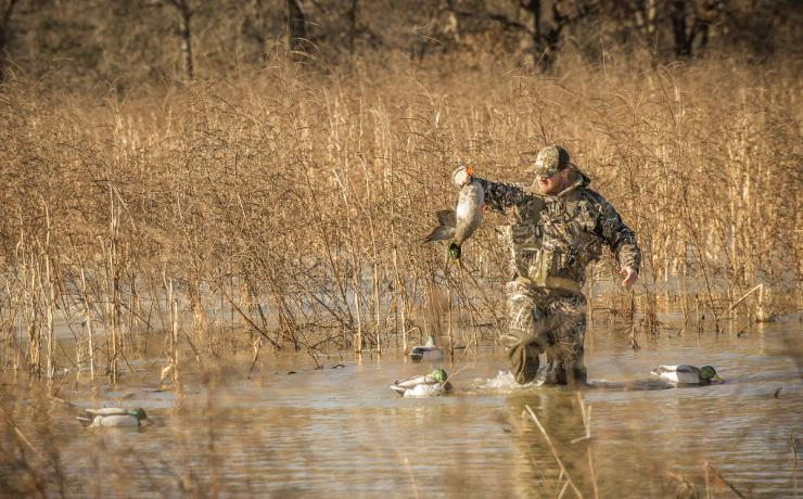 Atlantic Flyway hunters will enjoy a 60-day 2019-'20 season but can only take two mallards daily. Photo © Bill Konway