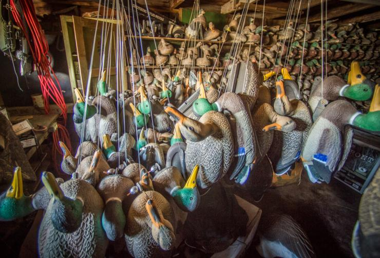 Knowledgeable waterfowl hunters wash their decoys after the season and then store them in a dry, shaded space. Photo © Bill Konway