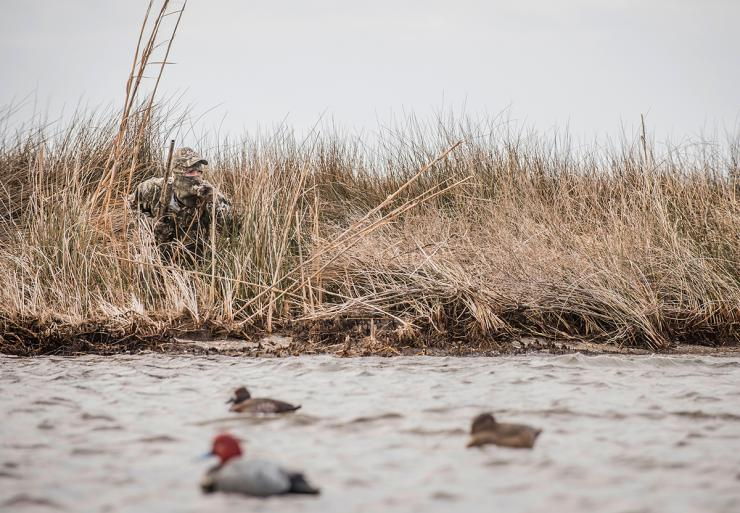 Stuck on shore while diving ducks pile up in the middle of the lake? No sweat. You can still score. Photo © Bill Konway