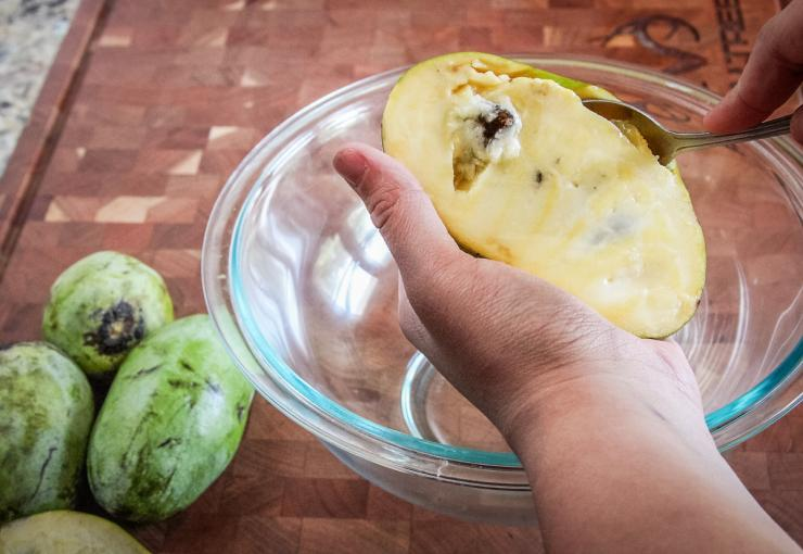 Use a spoon to scoop the ripe paw paw flesh from the skin.
