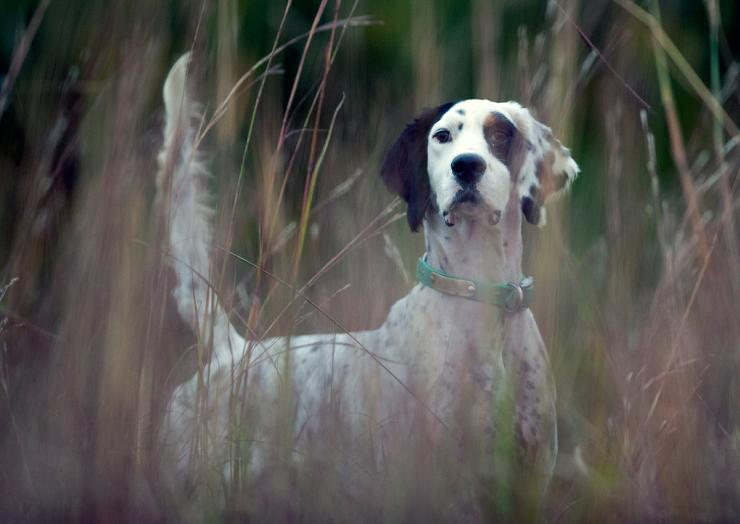 Prepare your dog for snake encounters. (© Purina Pro Plan photo)