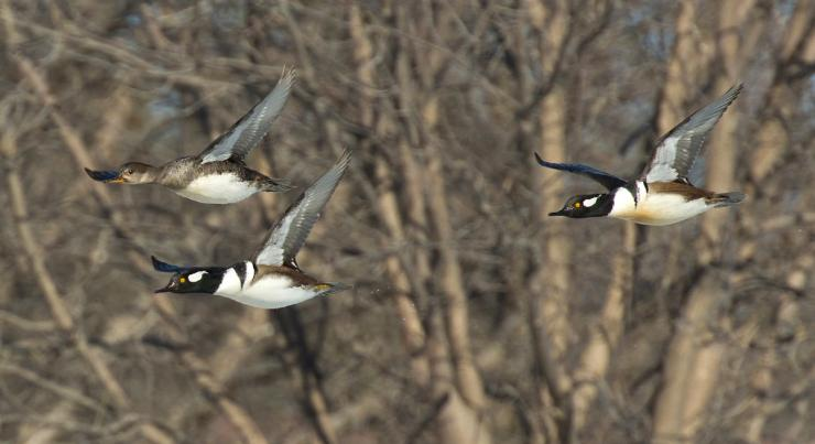 Nothing matches a relaxing float hunt for wood ducks. But wait — what are those? Photo © Steve Oehlenschlager/Shutterstock