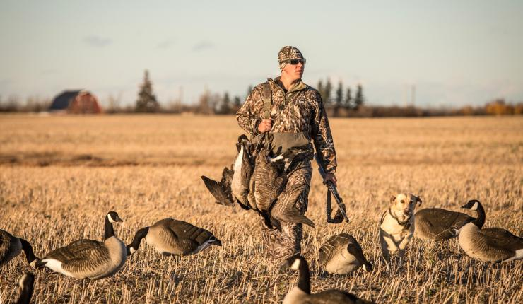 Early seasons for locally breeding honkers represent the first fowling opportunities of the season. They also pose unique challenges for hunters. Photo © Tom Rassuchine/Banded