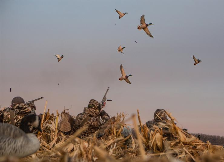 Those ducks just seem to be floating, offering easy shots. Be careful, though. Photo © Tom Rassuchine/Banded