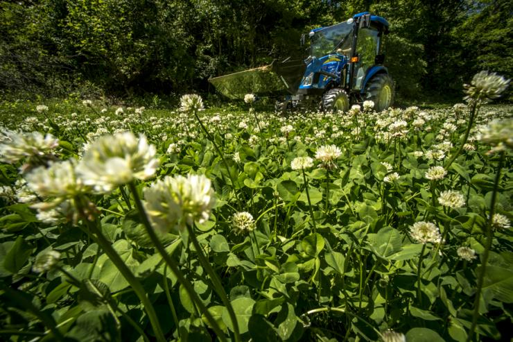 Perennials such as clover are the backbone of a well-rounded food plot program. Bill Konway image.