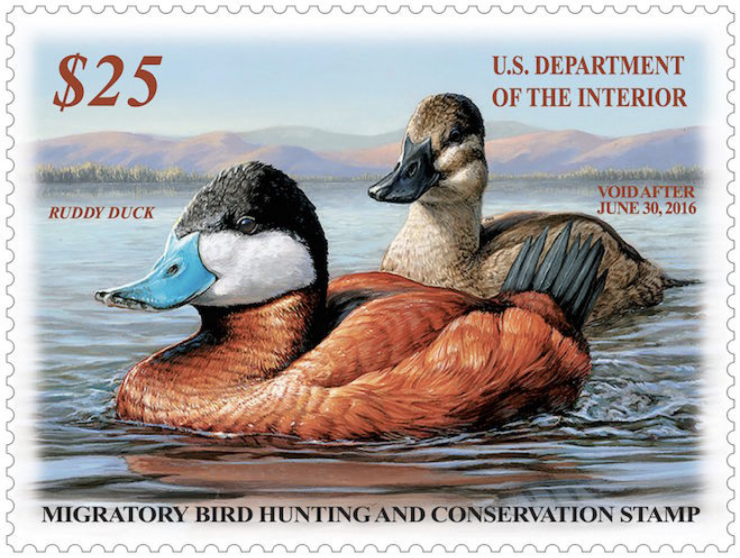 A drake and hen ruddy duck adorn the 2015-'16 federal duck stamp.
