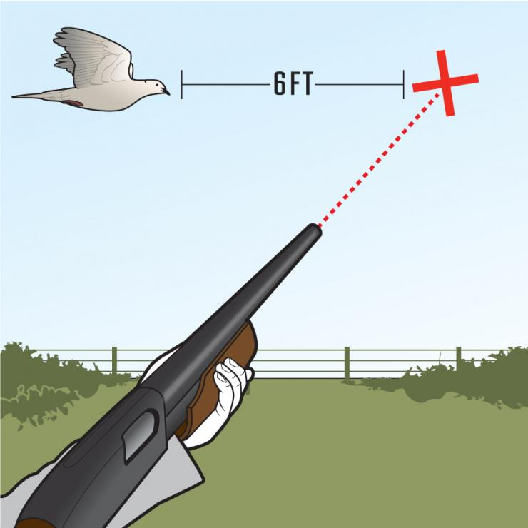 ecfb43e23dfda ... which means your barrel needs to be 6 inches in front of the dove. One  inch of barrel movement equals about 1 foot of distance when you're shooting  ...
