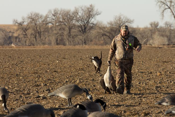 2948c4f081 Early seasons for resident Canada geese evoke strong contrasts. Hunters  often wear shorts and Crocs while battling mosquitoes to pursue a bird  synonymous ...