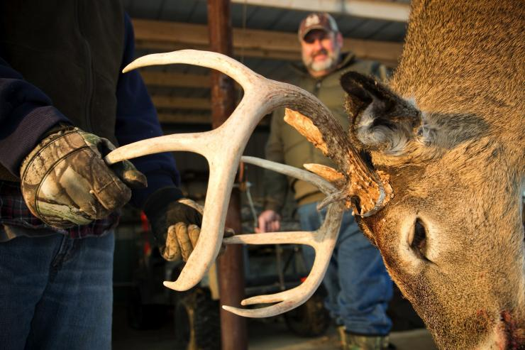 Hunter with whitetail trophy buck