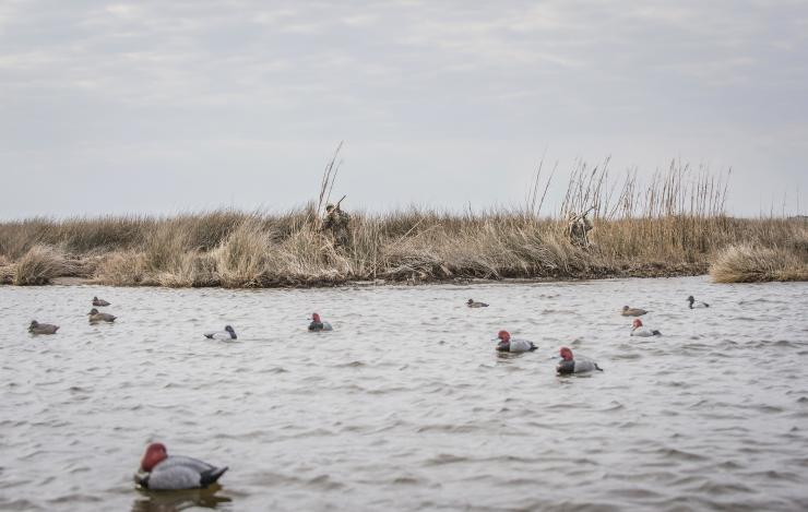 Knowing exactly when to call the shot is a critical skill in waterfowling. And every situation is different. Photo © Bill Konway
