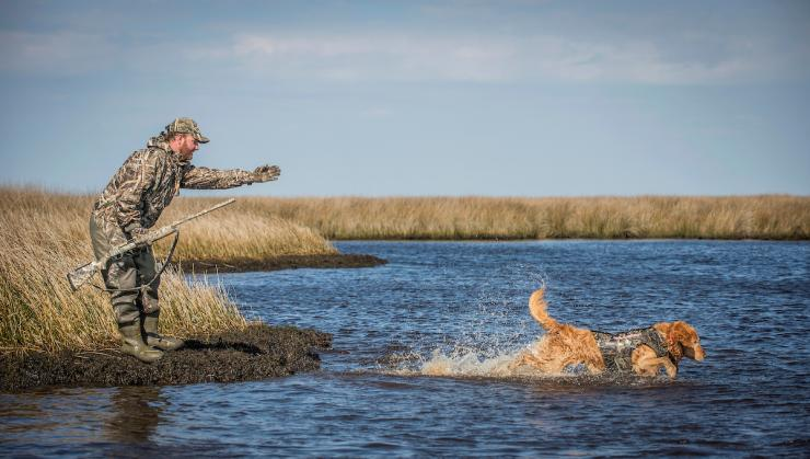 A well-trained retriever is by far the best tool for recovering crippled ducks or geese. Photo © Bill Konway