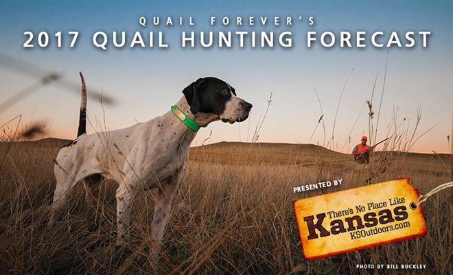 2017 quail hunting forecast from quail forever small for Realtree game and fish forecast