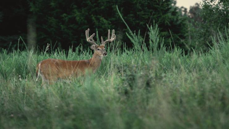 Food plots are a great way to improve herd health, if you plant the right amount.