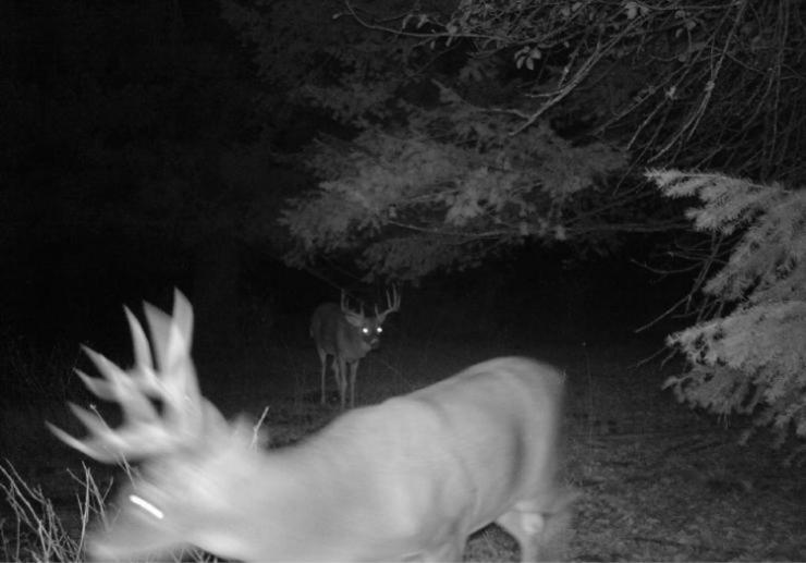Trail Camera Theft in the Whitetail Woods Spoil Experience