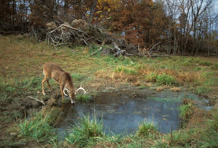 Mature bucks are completely different animals than other deer. But some aspects of hunting them remain the same.