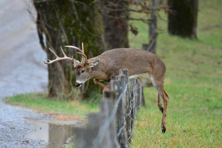 This ruling will help prevent the spread of CWD. (Shutterstock / Paul Winterman photo)