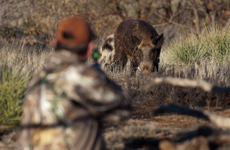 Pig hunting can be pretty intense. ©Russell Graves photo