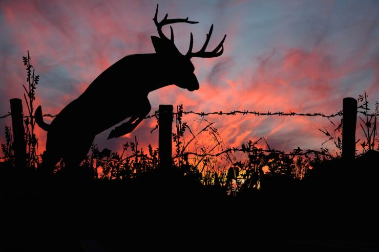 Real-life hunters don't always have the luxury of seeing the same bucks year after year.