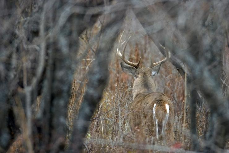 Do these things to see more big bucks.