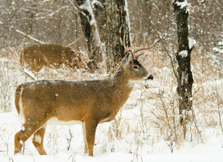 Cold weather brings tougher deer hunting conditions, yet higher odds of success.