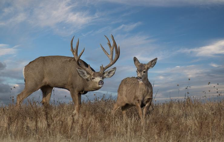 How to Plan a Western Big Game Hunt | Big Game Hunting