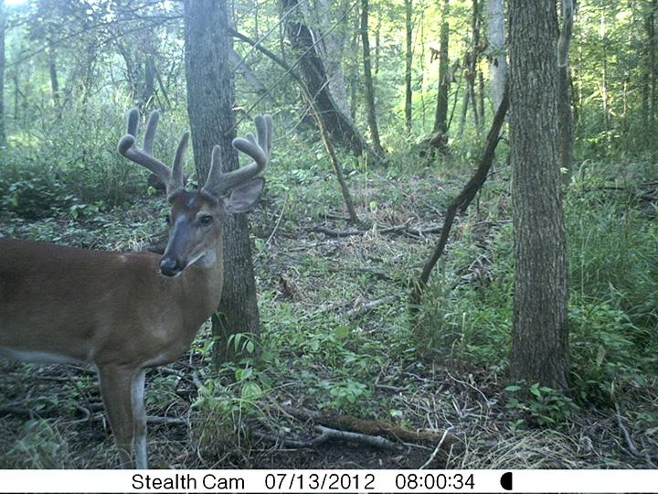 Realtree com's Browtines and Backstraps blog review of the