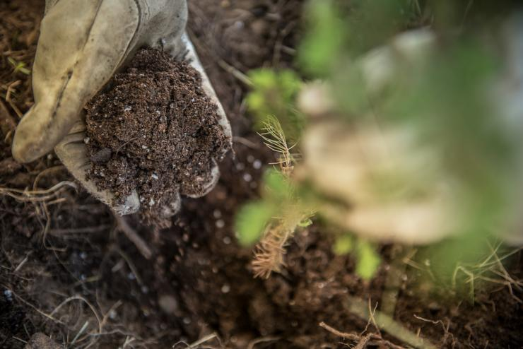 Do you take care of the soil that grows your food plots? (Craig Watson photo)