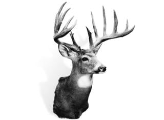 Taken in 1965, the Johnson buck truly is iconic. It's the Illinois state record typical and sits at No. 4 overall. (Boone and Crockett photo)