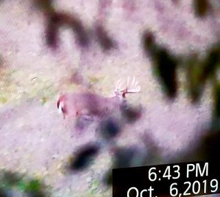 What would you do if this buck were at 60 yards? (Cody Tucker photo)