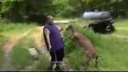 This guy doesn't seem to mind getting beaten up by a deer.