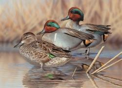 DENVER CO Artist Richard Clifton Won His First Colorado Waterfowl Stamp Art Contest In 2010 And Now Hes Second 2011