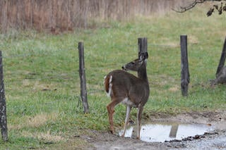 Don't place water holes out in the open. Put them in secluded areas deer will feel safe during daylight hours. (Shutterstock / Paul Winterman photo)