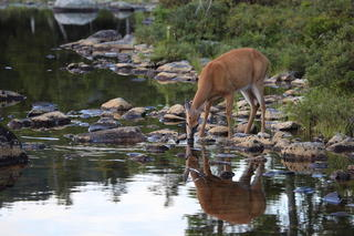 If you don't have a river, stream or pond on your property, you need to look at making water available to the local deer herd. (Shutterstock / Trent photo)