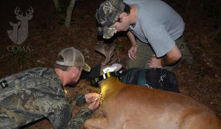 Research is key to the long-term success of deer hunting. (Quality Deer Management Association photo)