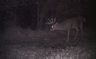 The Stroobants family used trail cameras to help pattern this buck. (Nicole Stroobants photo)