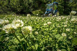 Want lush food plots like this one? Follow the steps provided here. (Bill Konway/Realtree photo)