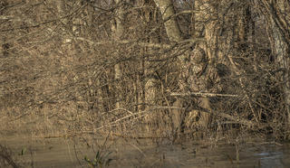 Make sure you blend into the cover surrounding you. Realtree will help with that. (Bill Konway photo)