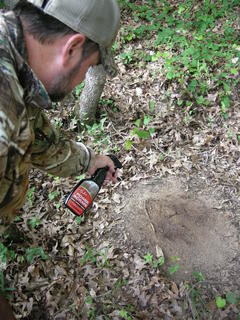 Adding whitetail scent to an existing scrape, or scrape seeding, is a worthwhile ploy during whitetail rut dates. (Photo courtesy of Tink's)