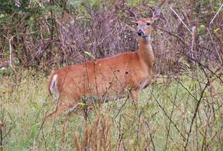 Shoot does early to fill the freezer and focus on your buck tag later in the season.